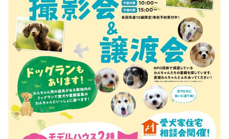 11/16(土)&17(日) わんちゃん撮影会・譲渡会開催!!